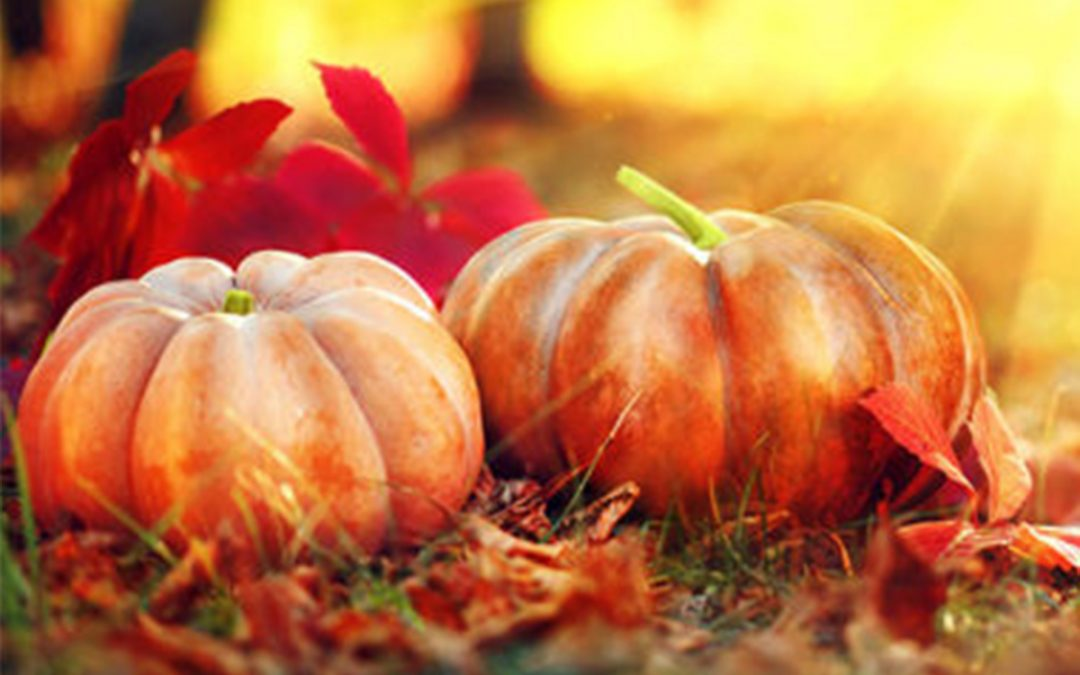 Celebrate Fall at Sterling Ranch!